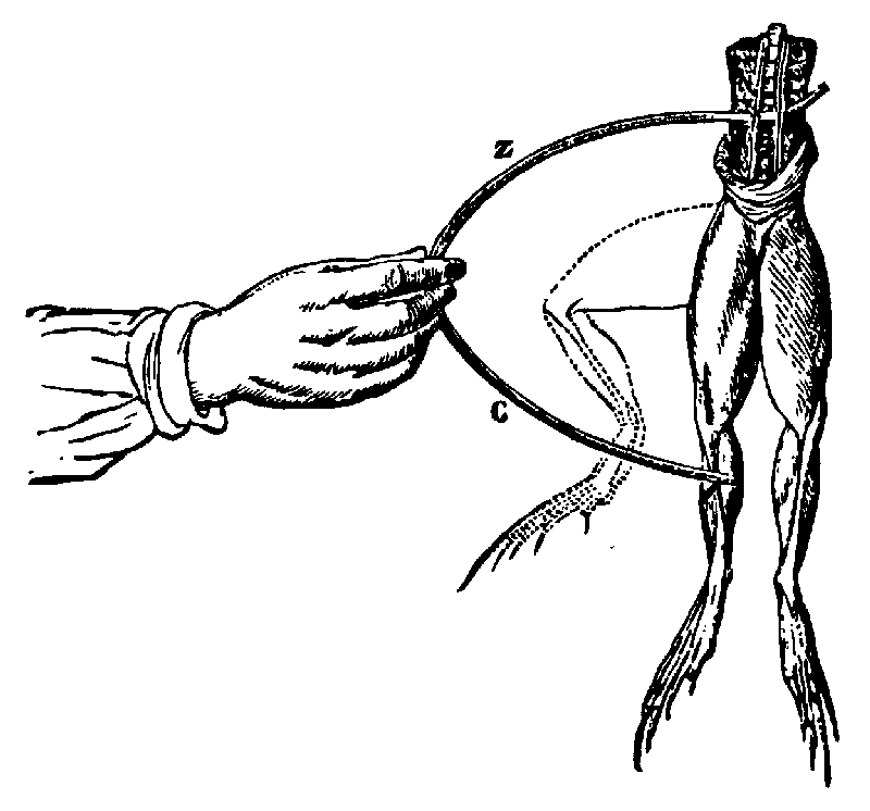 illustration of galvani u0026 39 s twitching frog leg  when
